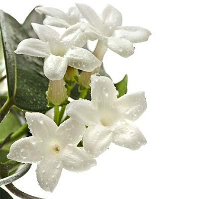 Kvetinové vône